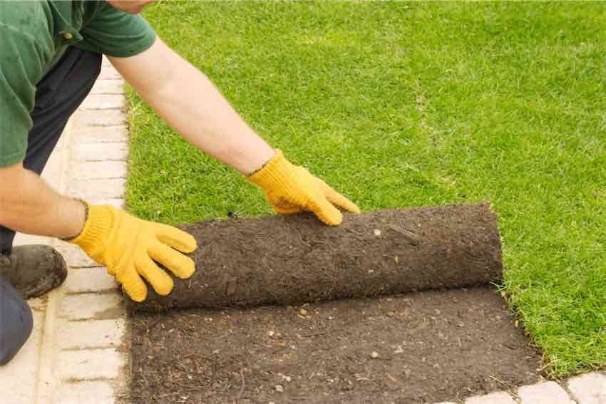 Turf Laying contractors